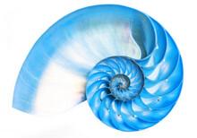 Blue Detail Of Nautilus Spiral...