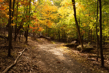 View of footpath along with autumn trees in the forest