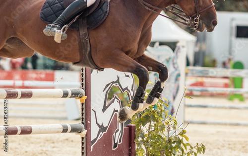 Fotografie, Obraz concours d'équitation, gros plans sur le cheval et son cavalier