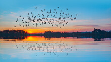 Silhouette Of Birds Flying Abo...
