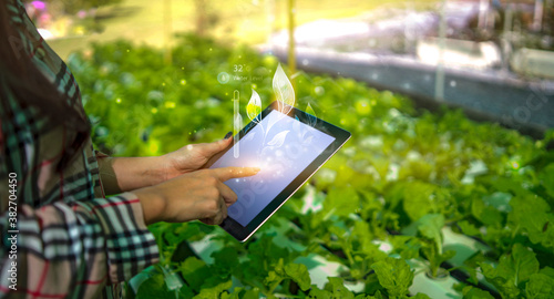 Fototapeta Farmer woman using smart tablet modern technology taking care of agriculture hyd