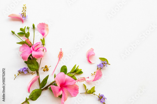 Fototapety, obrazy: pink flowers hibiscus local flora of asia arrangement flat lay postcard style on background white wooden