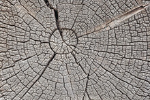 Structure Of Cracks Of Wood  Vector Background, Fragment Of An Old Tree With A Knot