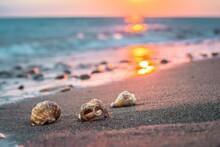 Closeup Of Three Sea Shells On...
