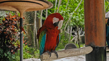 Parrot Ara With Red And Green ...