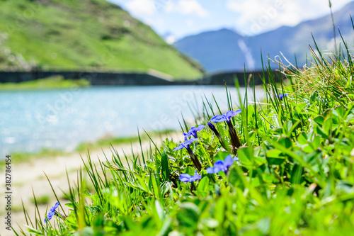 Fotomural Blauer Enzian, unscharfen Hintergrund der Nassfeld Grossglockner