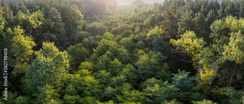 Deciduous autumn forest, aerial view, pattern or texture. Canvas