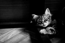 Portrait D'un Adorable Chaton Angora Tigré En Train De Dormir à La Maison