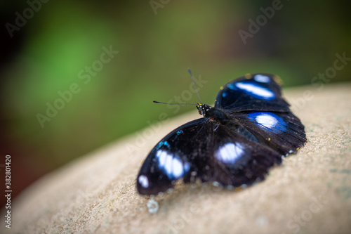 Photo insect macro butterfly closeup wing nature flower green background wildlife