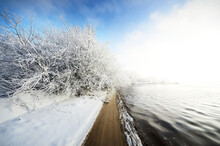 Snow-covered Trees In A City P...