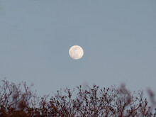 Full Moon In The Evening Sky With Branches In The Foreground