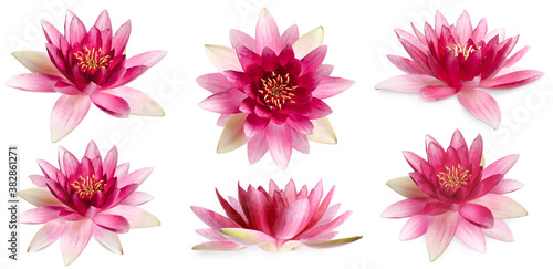 Fototapeta Set of beautiful lotus flowers on white background. Banner design obraz
