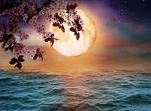 Fantasy World. Blossoming Cherry Tree Branch And Full Moon In Starry Sky Over Ocean