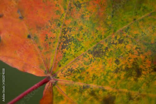 Kolorowy liść jesienią makro