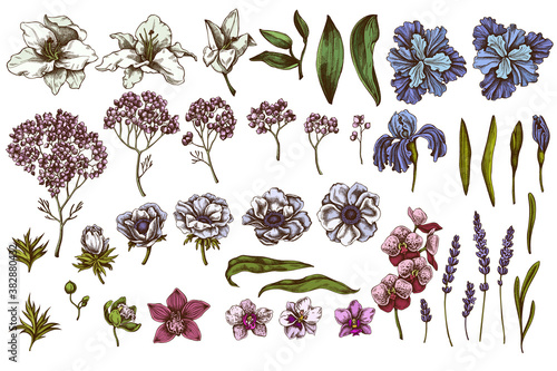 Vector set of hand drawn colored anemone, lavender, rosemary everlasting, phalae Fototapeta