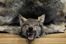 Head And Fur Of Killed Wolf. H...