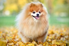 Portrait Of Cute Happy Smiling...