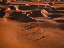 Aerial Abstract View Of Camels And Their Shadows In The Sand Dunes Of Abu Dhabi, United Arab Emirates.