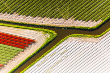 Aerial View Of Beautiful Tulip Fields, Netherlands