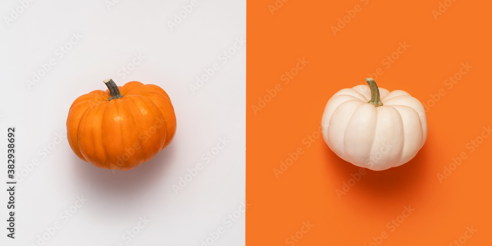 Fototapeta Creative halloween flat lay two pumpkin, white and orange on colored background with copy space.