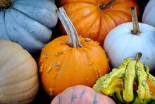 Photograph Of An Autumn Displa...
