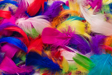 Colorful Feather Background.