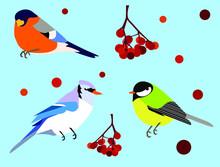 Vector Image Of Winter Birds With Rowan