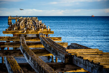 A Pier Full Of Birds In Punta Arenas, Chile
