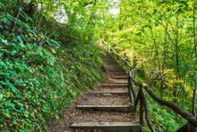 Deep Forest Hiking Trail. Hiki...