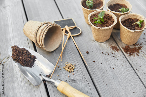 Obraz gardening, eco and organic concept - vegetable seedlings in pots with soil and name tags with garden trowel on wooden board background - fototapety do salonu