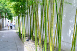 Bamboo Forest in Suzhou Museum, China