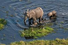 Elephant Calf Walking Behind Her Mother In The Okavango Delta