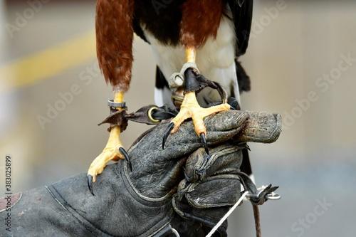 Cuadros en Lienzo 鷹と鷲