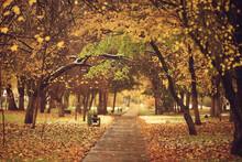 Autumn Season Landscape In Par...