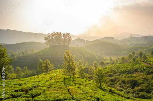 Canvastavla Tea plantations in Munnar, Kerala, India
