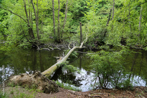 river in the woods with fallen tree