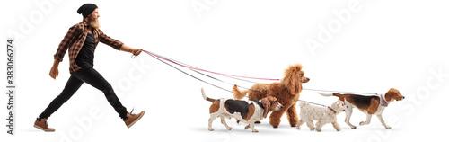 Full length profile shot of a bearded guy walking many dogs