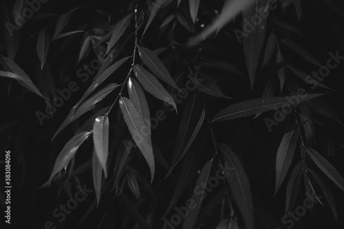 The perfect black and white background images of autumn leaves are perfect for seasonal use Wallpaper Mural