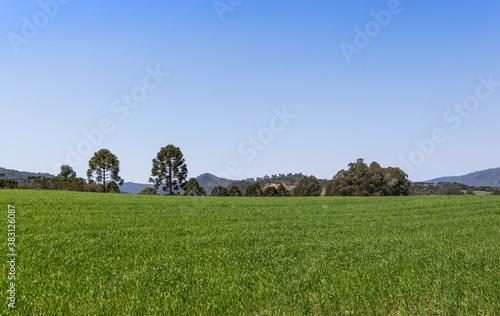 Fotografie, Obraz Campo verde com plantação de arroz