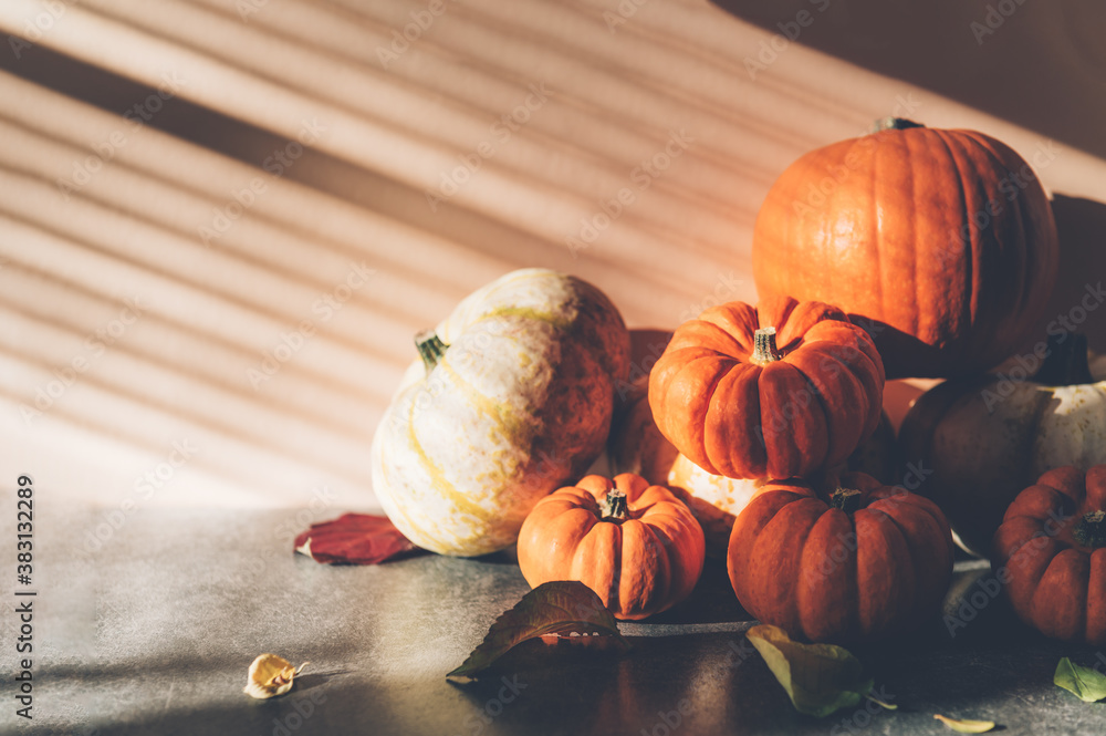 Fototapeta Pile of different pumpkins with strong shadows. Halloween or Thanksgiving Holiday backgrounds