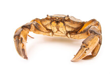 Sea herbal Arthropod Cra...