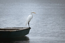 A White Heron Stands In The Board Of The Boat