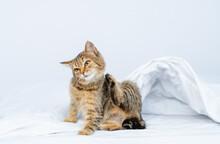Tabby Kitten Scratches Itself ...