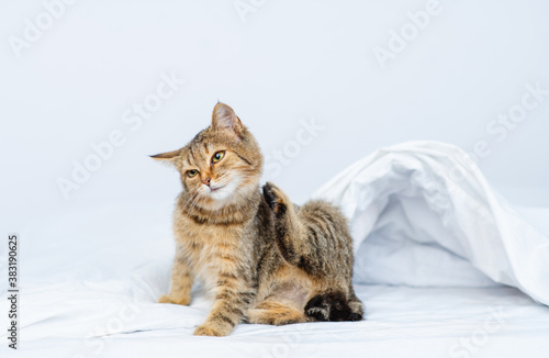 Tabby kitten scratches itself while sitting at home on the bed. Itching problems in pets