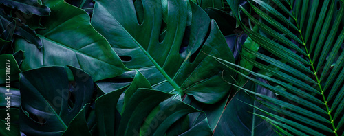 closeup tropical green monstera leaf background Fotobehang