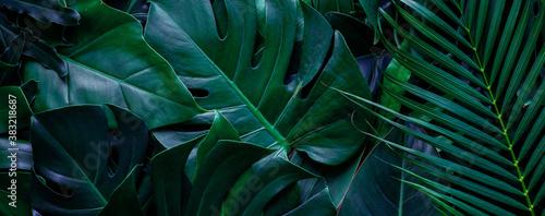 closeup tropical green monstera leaf background Wallpaper Mural
