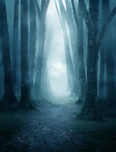 A Dark And Moody Forest Pathway Covered In Mist. Photo Composite.