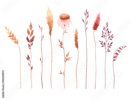 Set of watercolor plants and flowers, illustration design elements isolated on white background Canvas