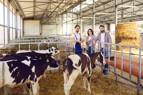 Fototapeta Group of happy farm workers standing in barn on livestock farm with healthy calves in foreground obraz