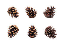 A Collection Of Large Pine Cone For Christmas Tree Decoration Isolated Against A White Background.